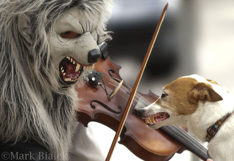Violin Monster plays for a Jack Russell Terrier