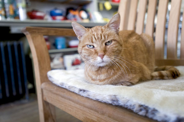 Home & Garden 'Louis' Cat Dies